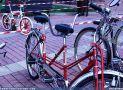 ciclofest201562