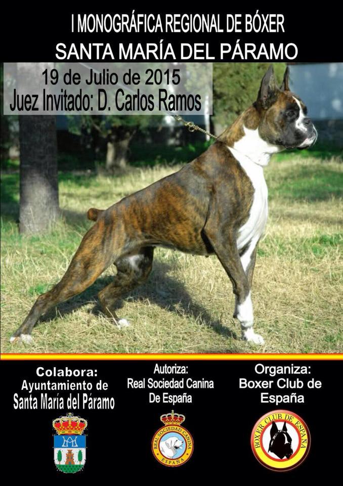 boxer20152